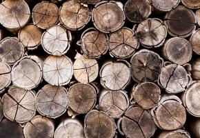 Koka pieskāriens